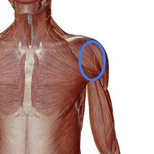 痛み 二の腕 外側
