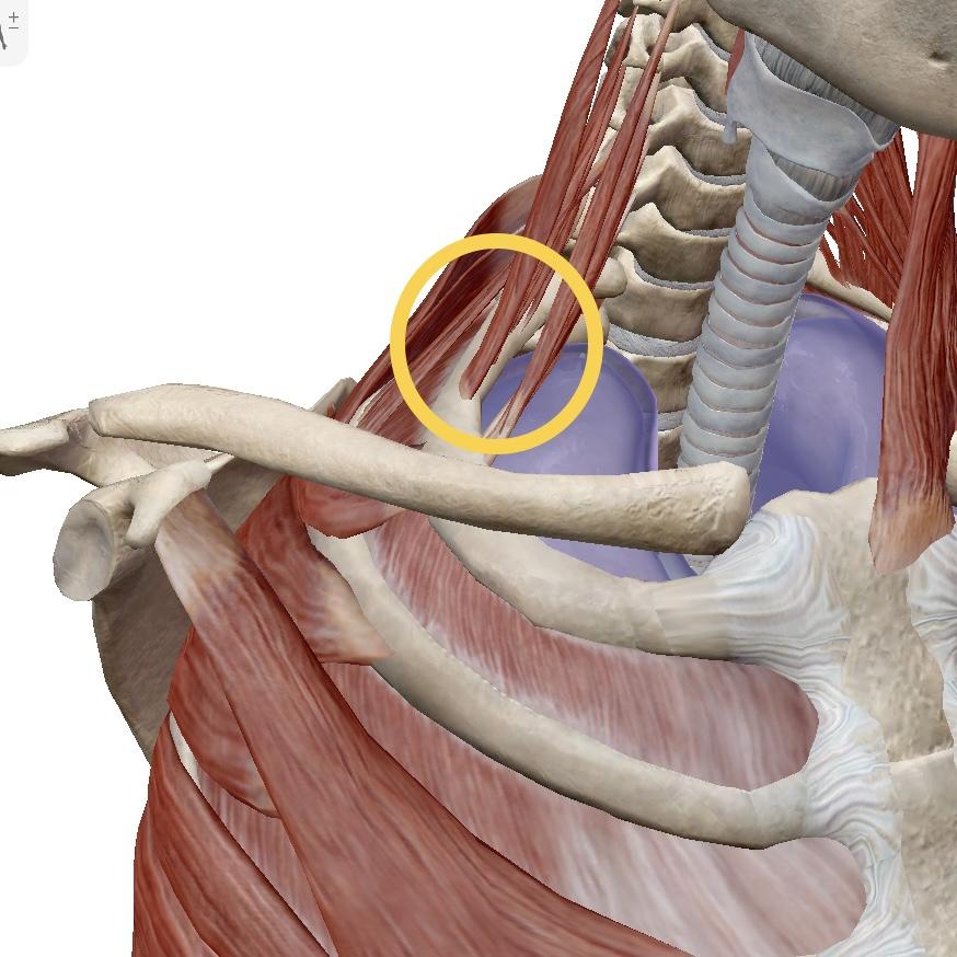 症候群 筋 トレ 胸郭 出口