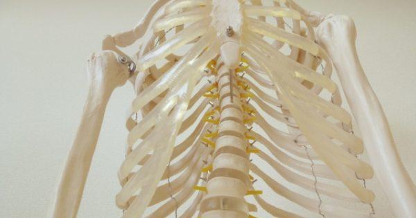 肋骨 打撲 と 骨折 の 違い